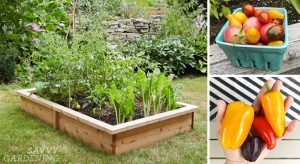 The Best Designs To Grow Your Garden